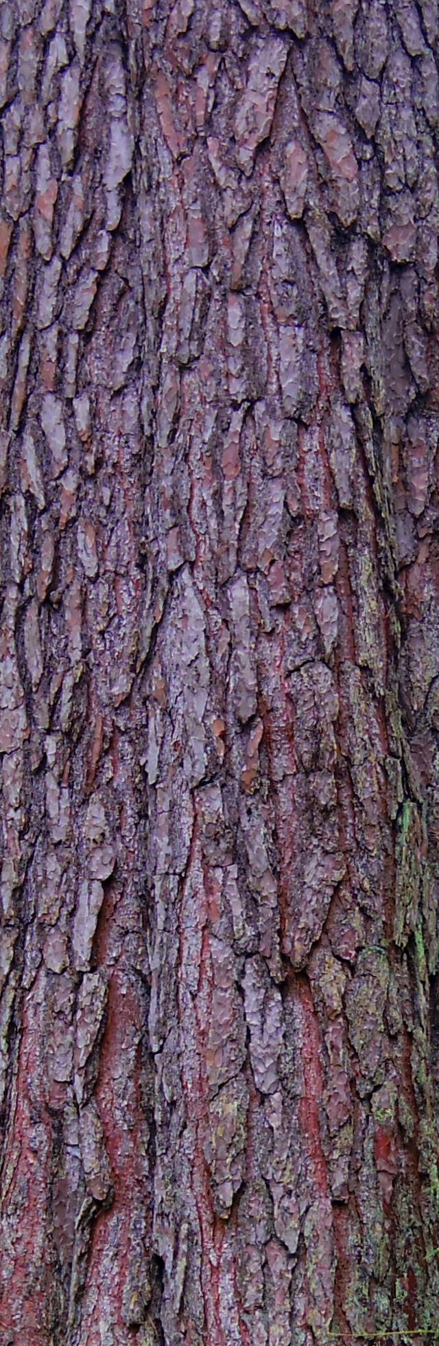Tree Bark Textures Planet Texture